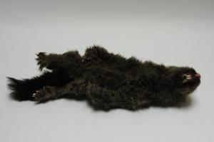 Dead Squirrel